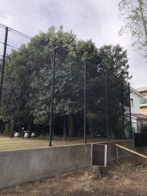 東京都調布市 T邸 伐採工事